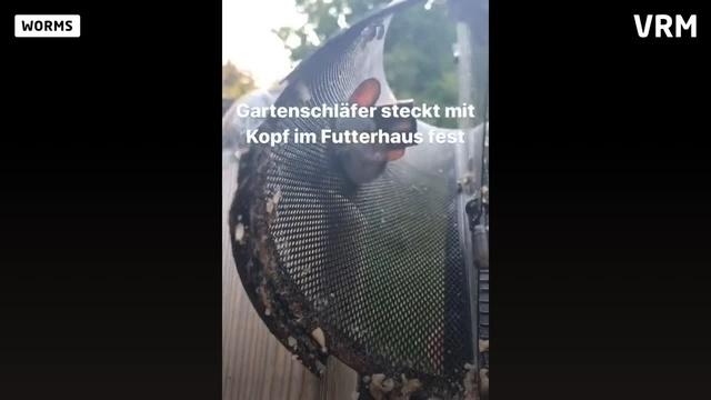 Tierischer Einsatz für die Feuerwehr Worms