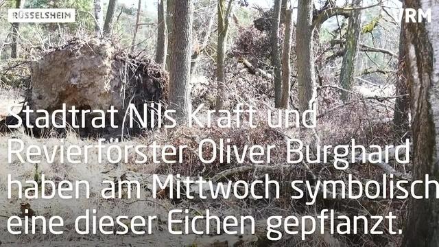 Tag des Waldes in Rüsselsheim