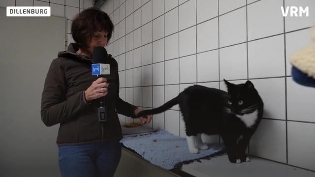 Herrchen gesucht: Katze Clara wartet schon lange