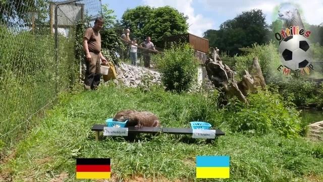 Ottilie orakelt: Deutschland startet mit Sieg ins Turnier