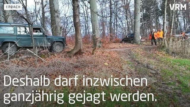 Jagdszenen aus dem Heppenheimer Stadtteil Erbach