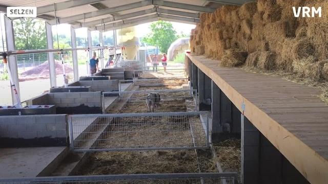 Schweineparadies Selztalhof