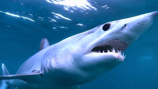 Wenn Haie angreifen - Kalifornien