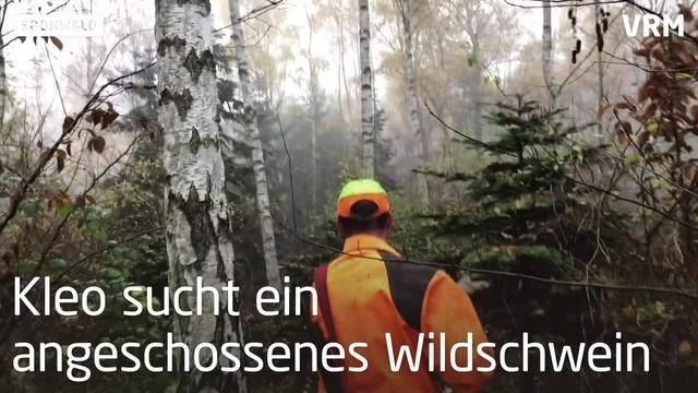 Soonwald: Nach der Jagd beginnt für Kleo die Arbeit