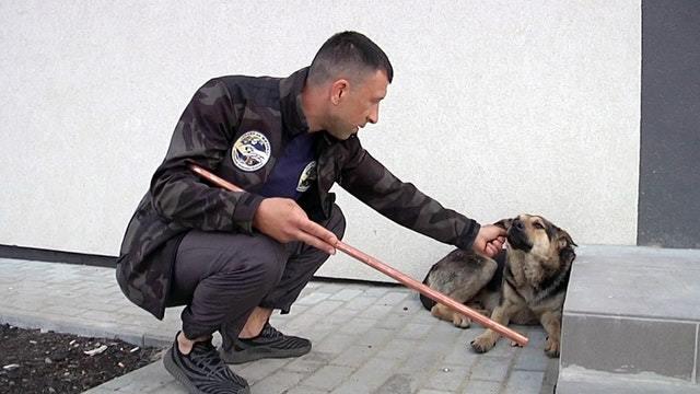 Jagd auf russische Straßenhunde