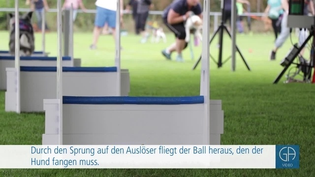 Flyball-Europameisterschaft in Obbornhofen