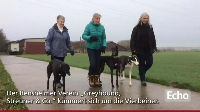 Bensheimer Verein rettet Greyhounds