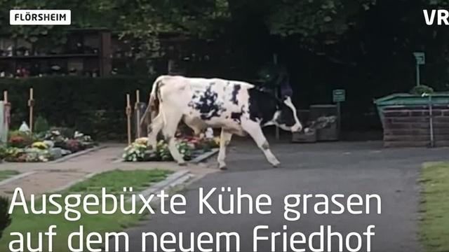 Flörsheim: Friedhofspflege der anderen Art