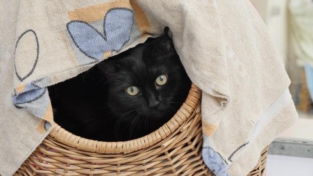 Alte Katzen hoffen auf neues Zuhause