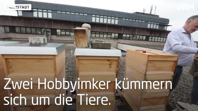 Darmstadt: Bienenvolk zur Untermiete