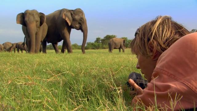 Angriff der Elefanten