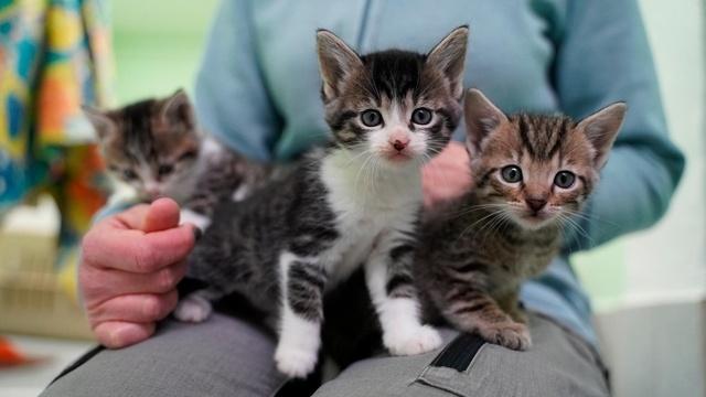 Neues Zuhause für viele Katzenkinder gesucht