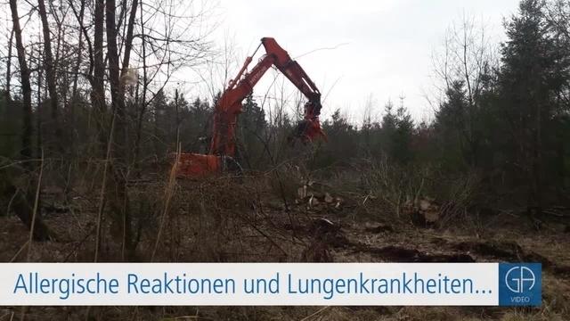 30000 Bäume gefällt - Rußrindenkrankheit im Licher Wald