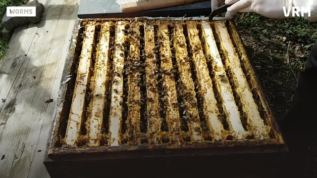 Frühling im Bienengarten