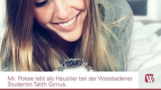 Wiesbaden: Ein Igel als Internetstar