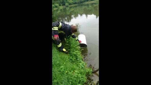 Feuerwehr entlässt Entenküken in die Freiheit
