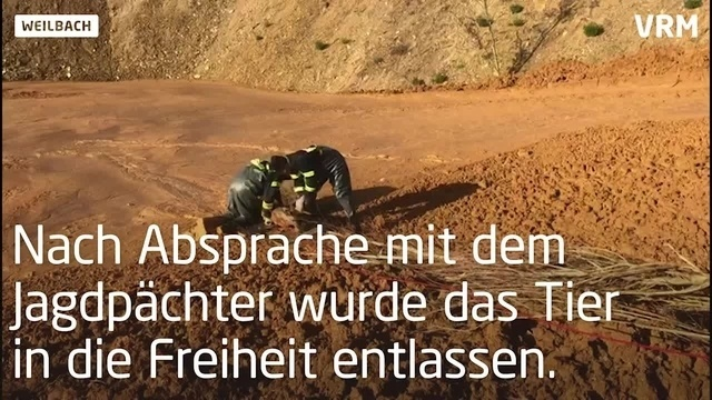 Rehrettung in Flörsheim-Weilbach