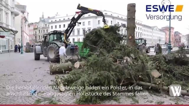 Weihnachtsbaum in Wiesbaden wird zersägt