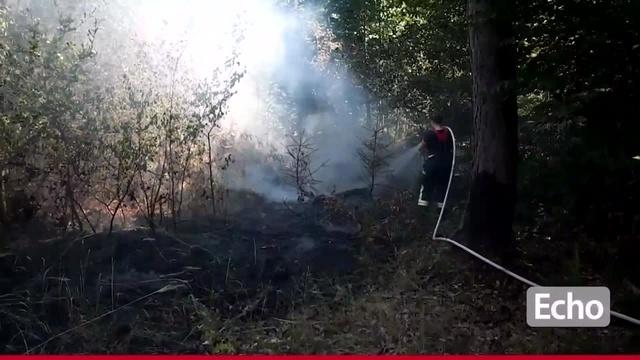 Waldbrand bei Groß-Zimmern
