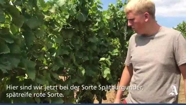 Stadecken-Elsheim: Paul Krug ist Rheinhessens bester Jungwinzer
