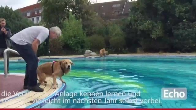Hundeschwimmen in Roßdorf