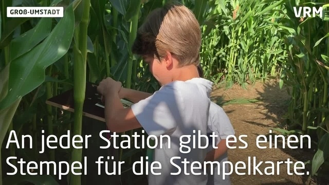 Das Maislabyrinth in Groß-Umstadt ist wieder geöffnet