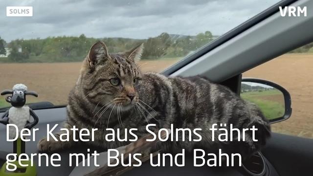 Reisekater Felix lässt sich gerne fahren