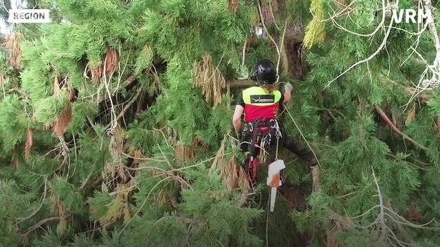 Arbeiten mit Aussicht: Klettern als Beruf
