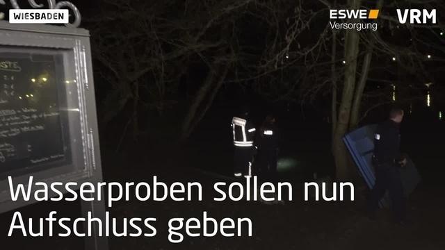 Wiesbaden: Tote Fische im Weiher des Kurparks