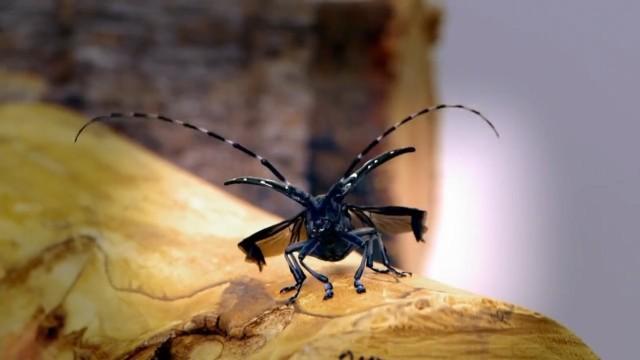 Invasion der Käfer und Raubwanzen