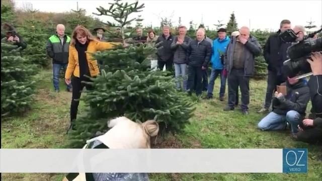 Die Weihnachtsbaumsaison ist eröffnet