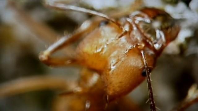 Der Ameisenplanet