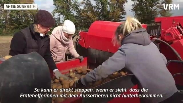 Kartoffelernte bei Rheindürkheim