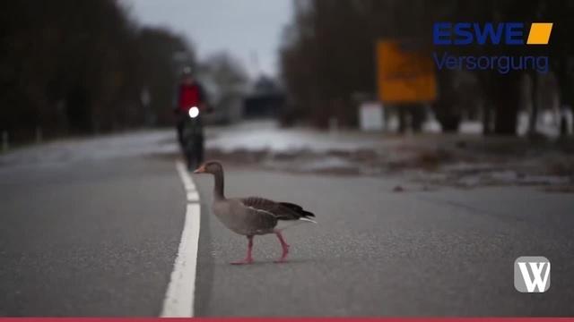 Hochwasser: Impressionen von der hessischen Seite